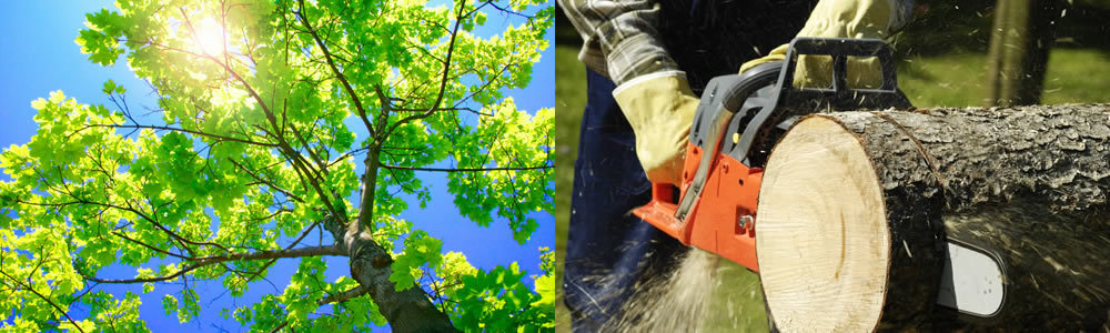 Tree Services Willsboro